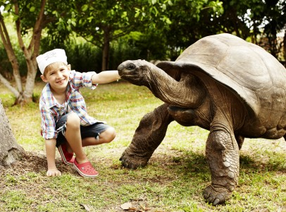 Aldabra Tortoises - Meeting James