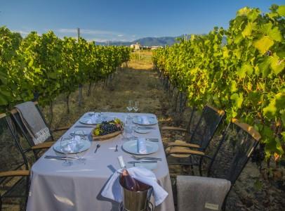 ZornitzaFamilyEstate-vineyards-lunch